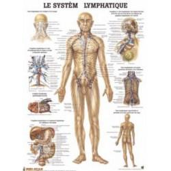 """Planche Anatomique """" Le Système Lymphatique """"Auluga Services – Matériel Médical"""