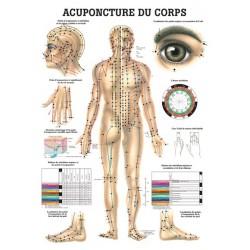 """Planche Anatomique """" Acuponcture du Corps """"Auluga Services – Matériel Médical"""